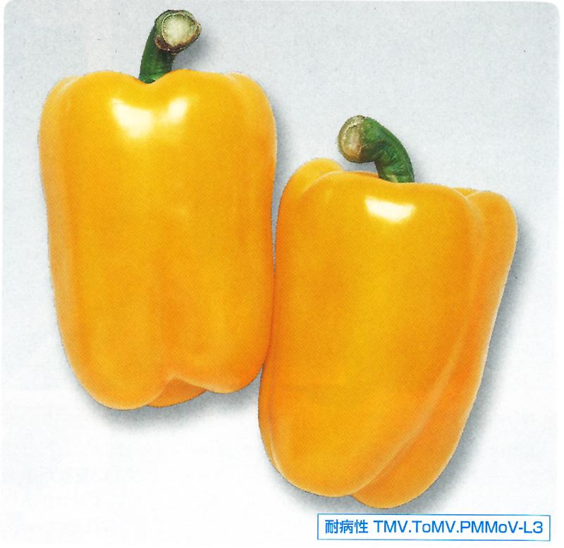 フルーピーイエロー カラーピーマン種 500粒 ピーマン種子 【ピーマン種】【タキイのタネ】【送料無料】【野菜の種】