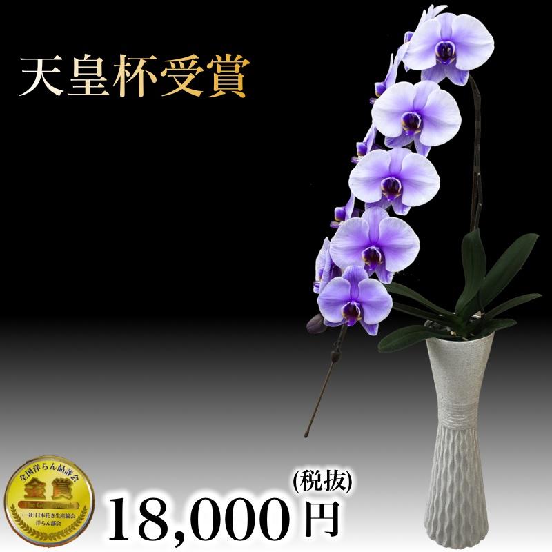 パープルエレガンス 一本立ち 珍しい胡蝶蘭 おしゃれなインテリアとしても使える高級花瓶セット
