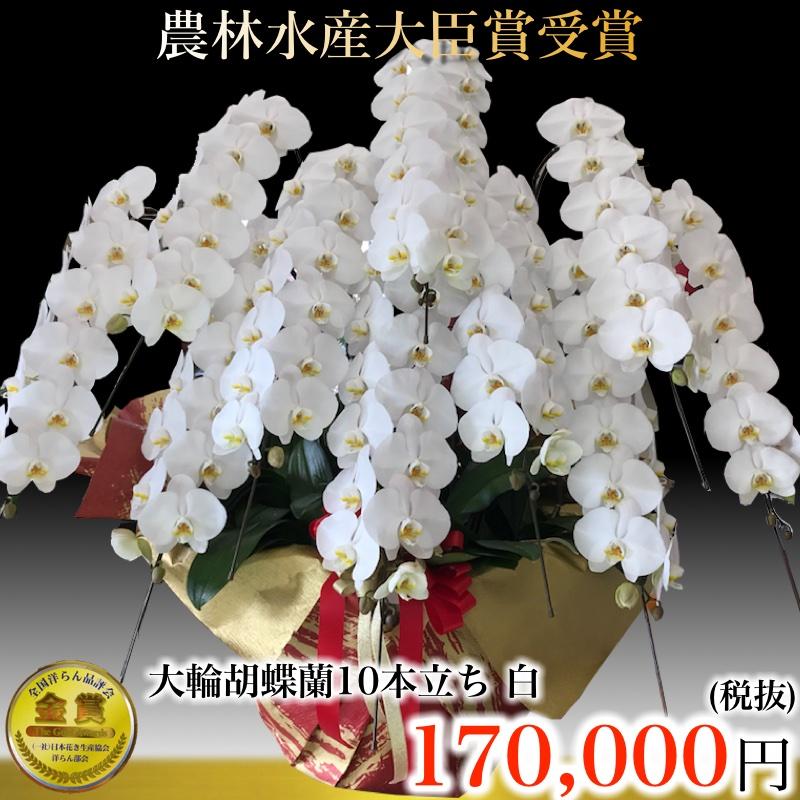 胡蝶蘭 10本立ち ハイグレード正月