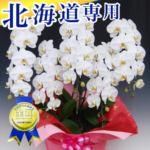 北海道専用 胡蝶蘭5本立ちスタンダード