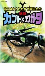 その他 お得クーポン発行中 ドキュメンタリー バーゲンセール 中古 DVD レンタル落ち カブト×クワガタ たたかう甲虫たち 安心の定価販売 激闘 あつまれ