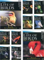 再再販 趣味 実用 全巻セット 送料無料 中古 レンタル落ち DVD 鳥の世界 10枚セット 当店一番人気
