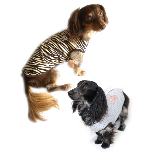 Dog clothes Studio tank top Dachshund DS/DM/DL size