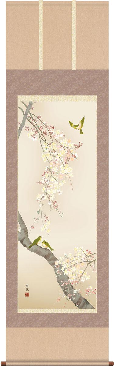 掛軸(掛け軸) 春用 桜花 西尾香悦作 尺五立 約横54.5cm×縦190cm【送料無料】g4096