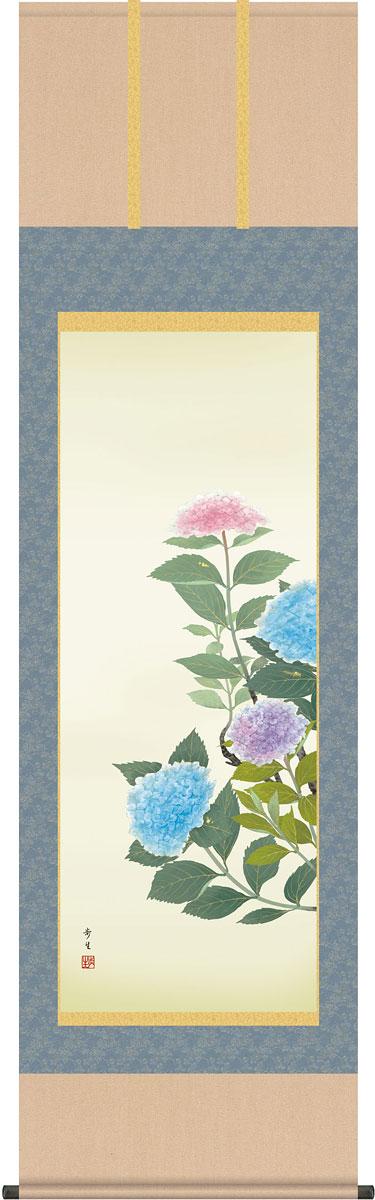掛軸(掛け軸) 紫陽花 北山歩生作 尺五立 約横54.5cm×縦190cm【送料無料】g4106