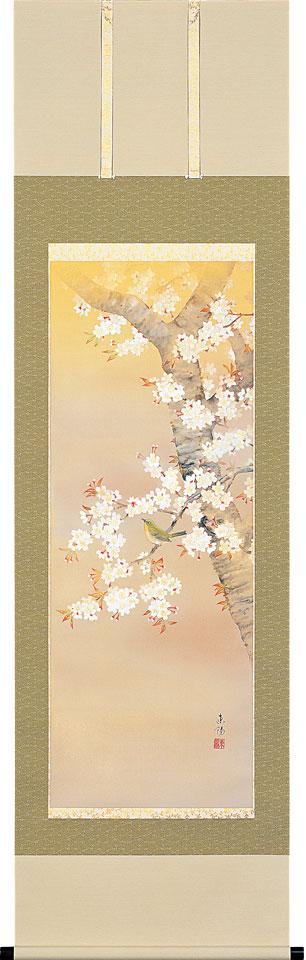 掛軸(掛け軸) 春用 桜に小禽 河村東陽作 尺五立 約横54.5cm×縦190cm【送料無料】p9642