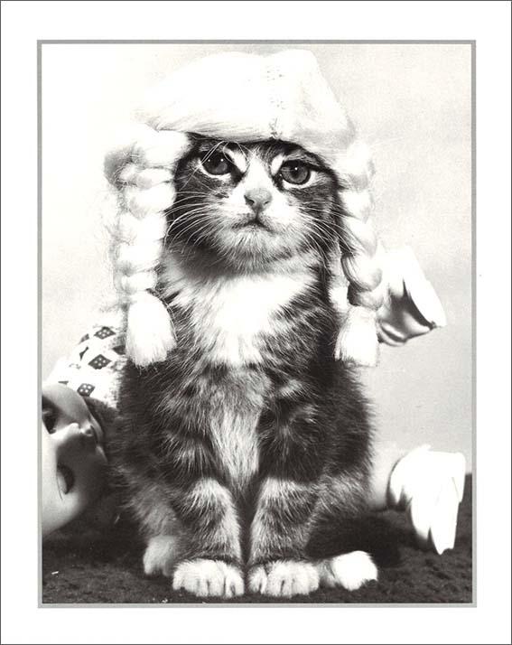 【メール便可/店内合計2,000円以上で送料無料】 ポスター 【モノクロ写真】「三つ編みヘアの猫/あなたの名誉」【サイズ/240×300mm】【厚めの紙でできたポスターです】(PCD-181)