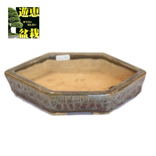 盆栽小鉢:忠寛 六角鉢 19.6cm【現】