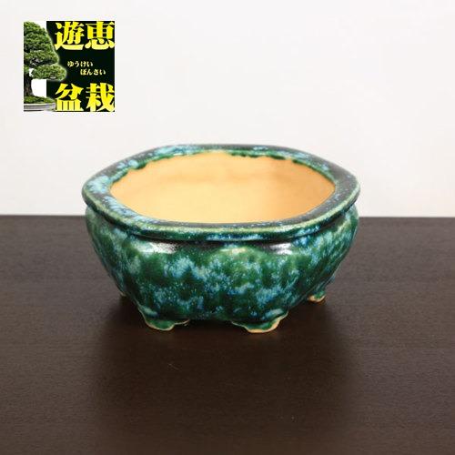 盆栽小鉢:重兵衛 足付六角鉢 16cm【現品】
