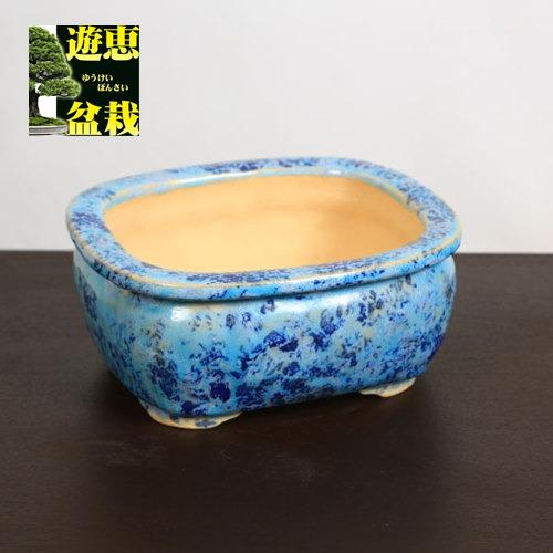 盆栽小鉢:重兵衛 長方鉢 16.3cm【現品】