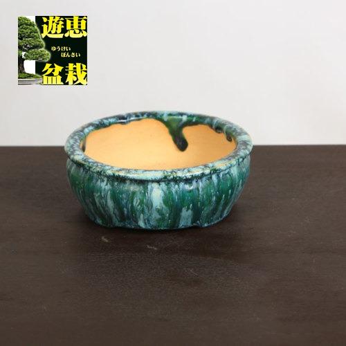 盆栽小鉢:重兵衛 丸鉢 13cm【現品】