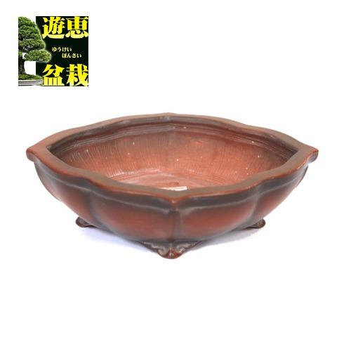 盆栽小鉢:美芸(常滑) 剣長角モッコ鉢 16cm