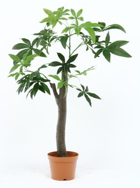 【大型商品】人工観葉植物 パキラ 朴の木タイプ 52665<花観葉植物 鉢 フラワー ディスプレイ ガーデン >