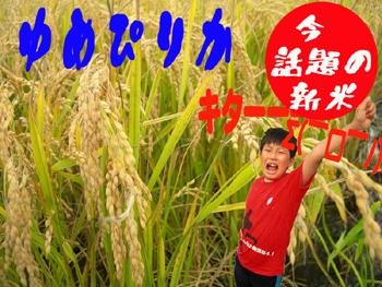 Now buzz! Celebrates the taste of Hokkaido rice Hokkaido