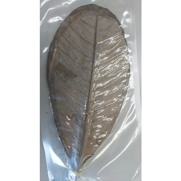 中国産 朴葉 乾燥ほうばの葉(M)真空 20枚x60P(P215円税別)/1200枚 Sサイズもあり 業務用 ヤヨイ 激安