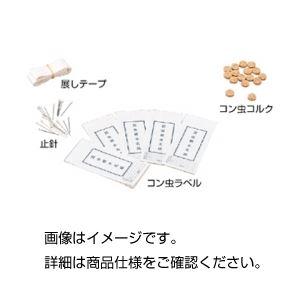 (まとめ)コン虫標本製作用品 コン虫コルク【×20セット】