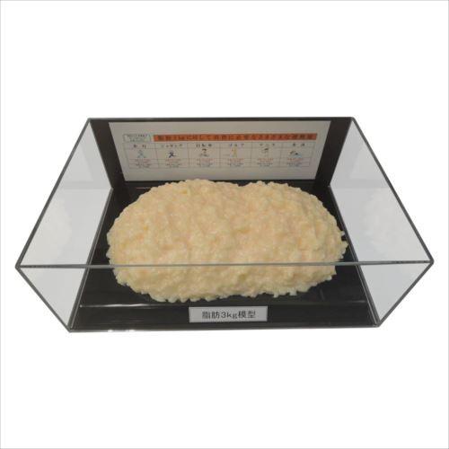 脂肪模型フィギュアケース入 3kg IP-980  【abt-1363030】【APIs】
