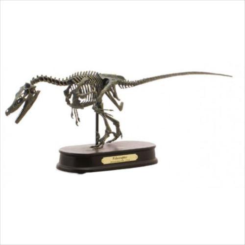 ヴェロキラプトル、最高峰の骨格モデル! ダイナソー スケルトンモデル(DINOSAUR SKELETONMODEL) 恐竜 ヴェロキラプトル FDS606(70106)  【yst-1057816】【APIs】