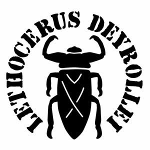 【タガメ ML腐食調 Ver.018 カッティングステッカー 大判Lサイズ 2枚組 幅約26.5cm×高約25cm】水生昆虫 タガメモチーフ ハンドメイド