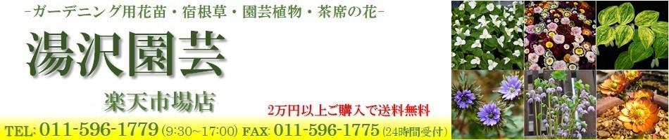 湯沢園芸 楽天市場店:ガーデニング用花苗、宿根草などを販売するお店です。