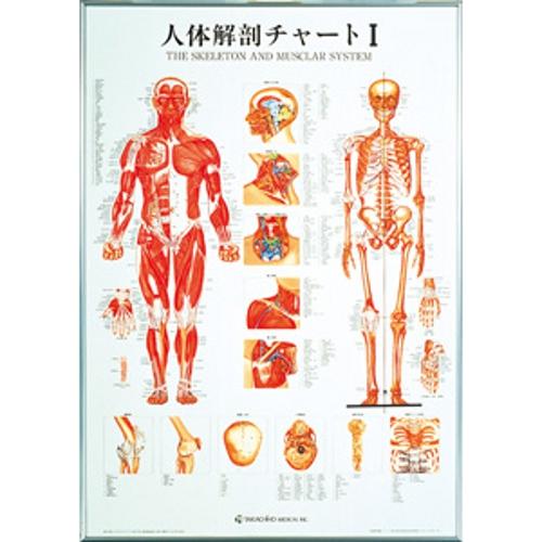 【送料無料】 人体解剖チャートI 104×74cm タカチホメディカル