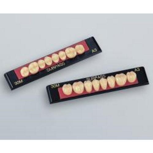 【送料無料】 硬質レジン臼歯 サーパス臼歯 ポステリアパレット 1パレット24個入り GC