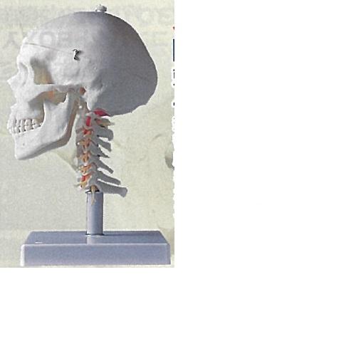 【送料無料】 3Dサイエンティフィックス A20/1 18×19×32cm 1.4kg