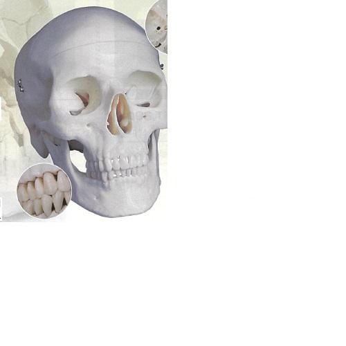 【送料無料】 3Dサイエンティフィックス A20 20×13.5×15.5cm 0.6kg