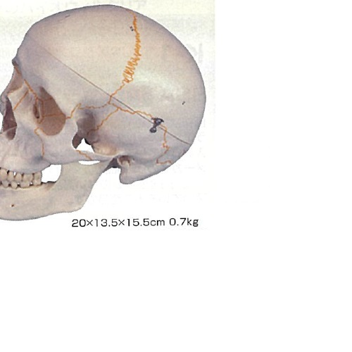 【】 3Dサイエンティフィックス A21 20×13.5×15.5cm 0.7kg:元気爽快