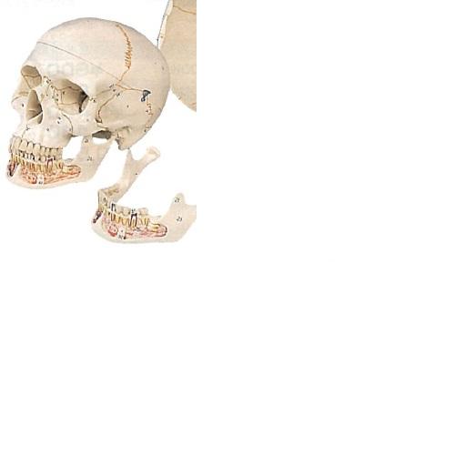 【送料無料】 3Dサイエンティフィックス A22 20×13.5×15.5cm 0.7kg
