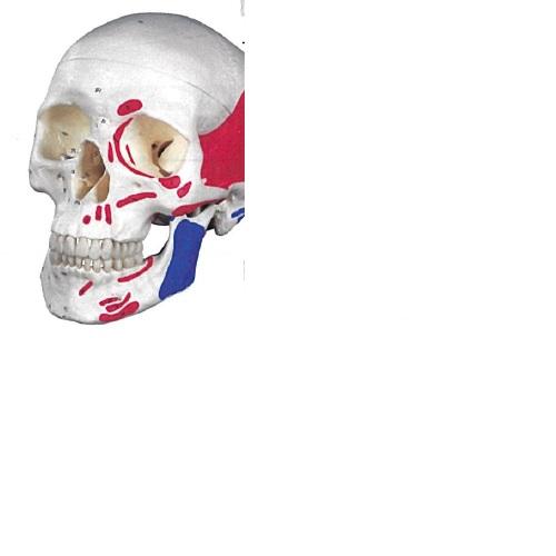 【送料無料】 3Dサイエンティフィックス A23 20×13.5×15.5cm 0.7kg