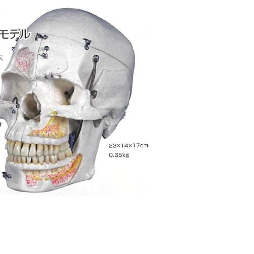 【送料無料】 3Dサイエンティフィックス A27 20×14×17cm 0.65kg