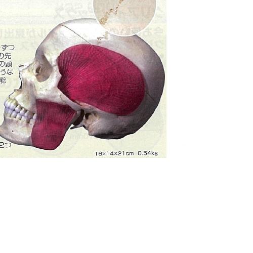 【送料無料】 3Dサイエンティフィックス A282 16×14×21cm 0.54kg