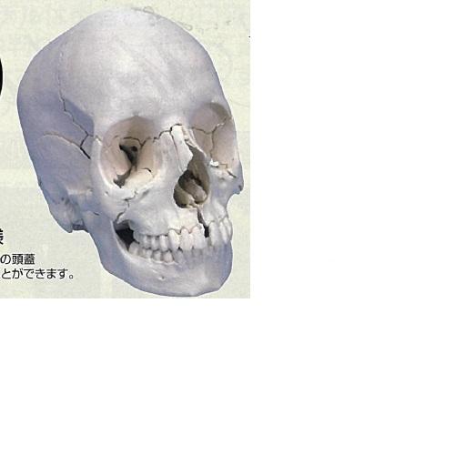 【送料無料】 3Dサイエンティフィックス A290 21×14×16cm 0.7kg