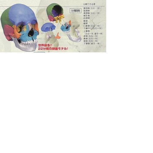 【送料無料】 3Dサイエンティフィックス A291 21×14×16cm 0.7kg