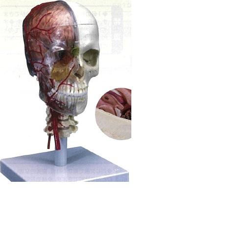 【送料無料】 3Dサイエンティフィックス A283 35×18×18cm 1.0kg