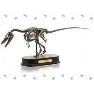 恐竜のフィギュア 模型 インテリア 玩具!ダイナソー スケルトンモデル(DINOSAUR SKELETONMODEL) 恐竜 ヴェロキラプトル FDS606(70106)