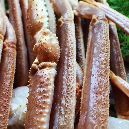 最高級 船凍品生ずわいがにオピリオ種4Lかに カニ 蟹 ずわい ズワイガニ ズワイ かに鍋 カニ鍋