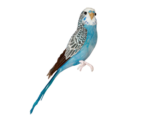 Budgie (Blue) budgies blue Artificial Birds PUEBCO b puebco アーティフィシャルバード 127071