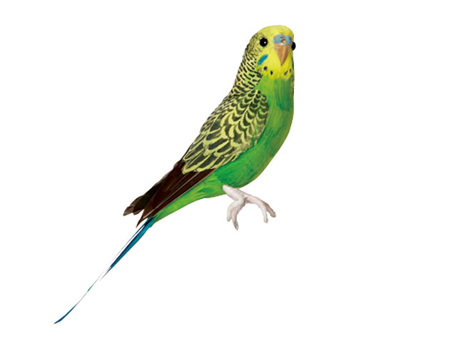 Budgie Green セキセイインコ 新作続 開店祝い グリーン PUEBCO あす楽対応_東海 Artificial Birdsプエブコ アーティフィシャルバード124070