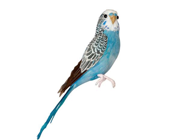 Budgie Blue 賜物 セキセイインコ ブルー 購入 PUEBCO Birdsプエブコ あす楽対応_東海 アーティフィシャルバード127071 Artificial