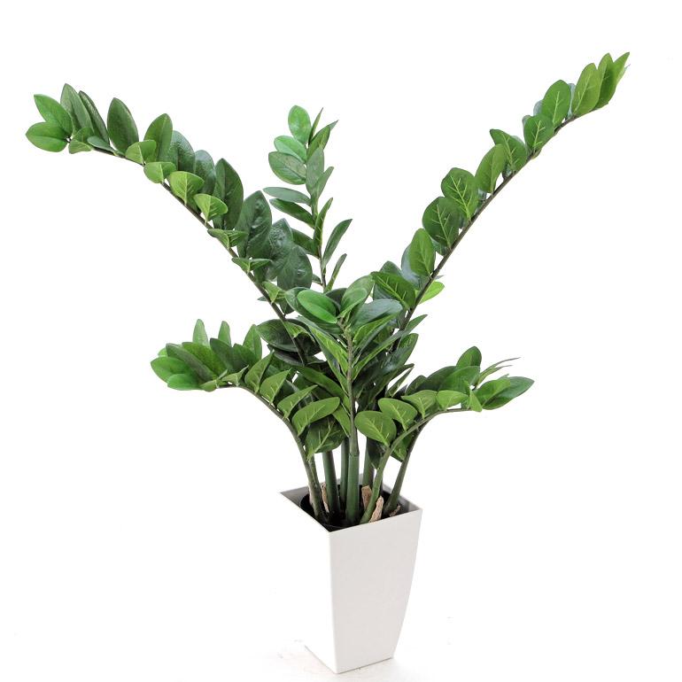 光触媒人工観葉植物(フェイクグリーン)92193「【本物そっくりの佇まい】 リアル・ザミフォリア - 白角ポット:CHIC7(高さ80cm 幅80cm)」(西:90)