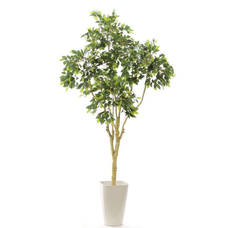 光触媒人工観葉樹(フェイクグリーン)804122「【自然で優雅な枝の広がり】リアル ベンジャミン 6枝 高さ158~163cm(スマートポットCHIC8)」(西:154)