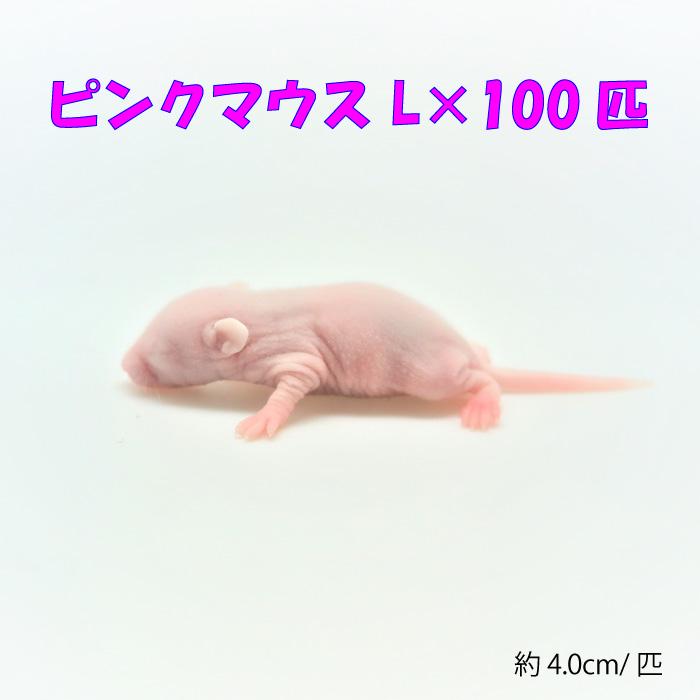 冷凍ピンクマウスL(100匹)約4.0cm/匹 冷凍マウス 冷凍餌 エサ 猛禽類 爬虫類 両生類 大型魚の肉食ペット用 クール便発送