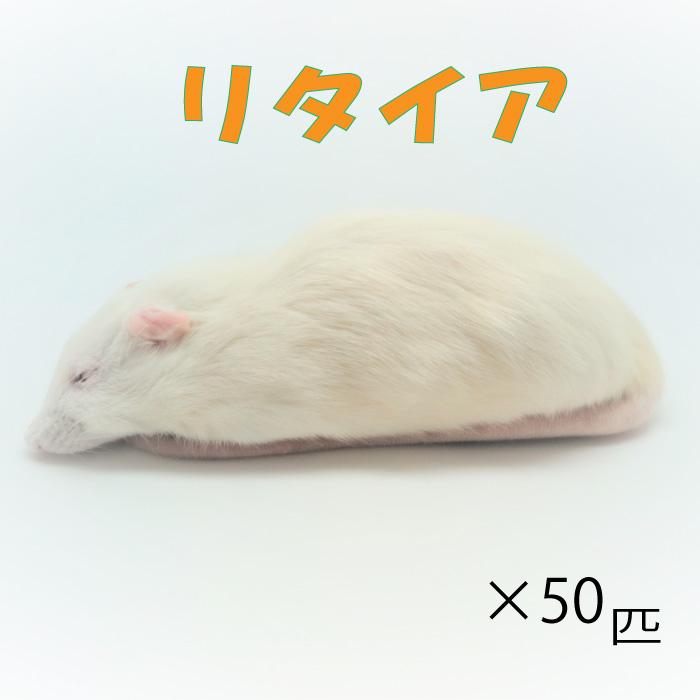 国内在庫 リタイアマウス 肉食ペット用 クール便発送 冷凍リタイアマウス 50匹 約10.0cm 匹 冷凍マウス リタイア 爬虫類 ホワイトマウス マウス 大型魚の肉食ペット用 エサ 猛禽類 冷凍餌 贈答品 両生類
