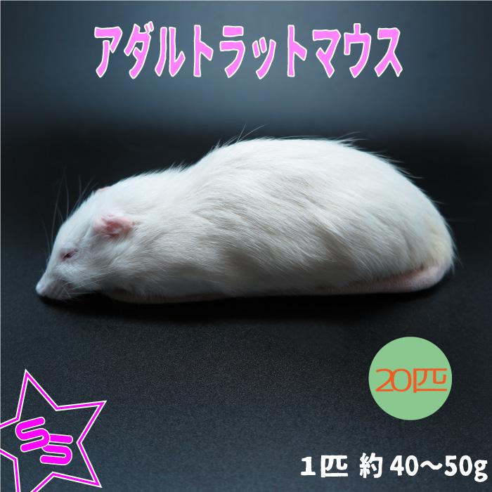 冷凍アダルトラット SSサイズ 約40~50g/匹 冷凍マウス アダルト 冷凍ネズミ 冷凍餌 エサ 猛禽類 爬虫類 両生類 肉食ペット用 クール便発送 20匹セット
