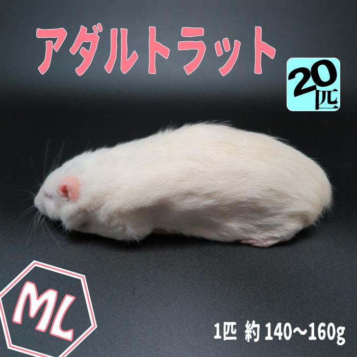 冷凍アダルトラット MLサイズ 約140~160g/匹 冷凍マウス アダルト 冷凍ネズミ 冷凍餌 エサ 猛禽類 爬虫類 両生類 肉食ペット用 クール便発送 20匹セット