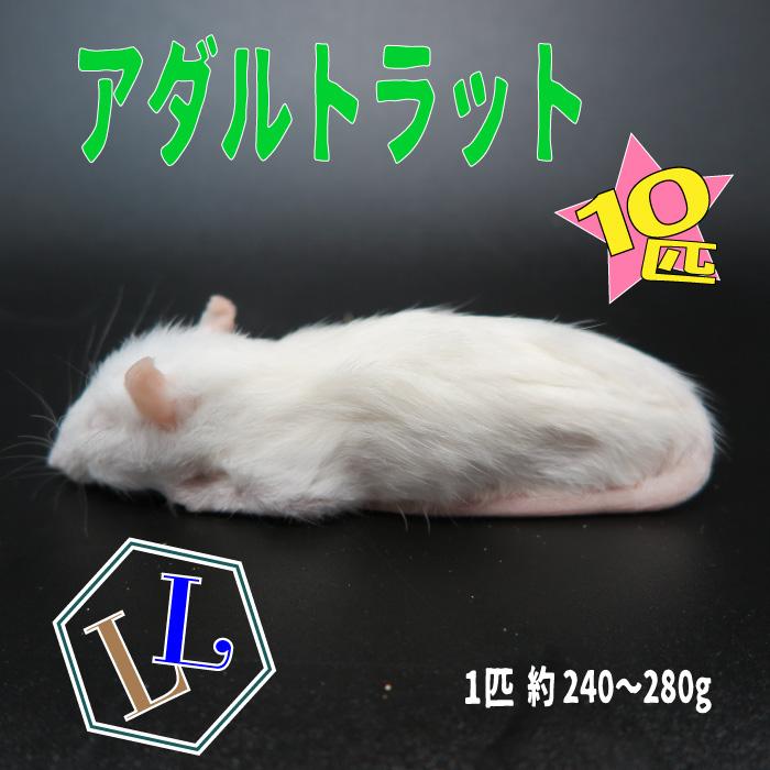 冷凍アダルトラット LLサイズ 約240~280g/匹 冷凍マウス アダルト 冷凍ネズミ 冷凍餌 エサ 猛禽類 爬虫類 両生類 肉食ペット用 クール便発送 10匹セット
